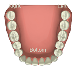 dental tooth chart mesa az meridian tooth chart app